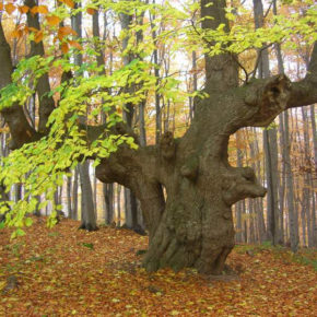 Erdők 2.